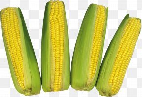 Corn Image - Corn On The Cob Flint Corn Waxy Corn PNG