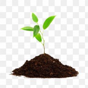 Green Tea - Tree Planting Root Seedling PNG