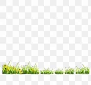 Green Grass - Green Google Images Download PNG
