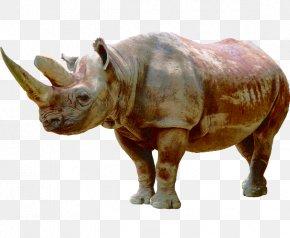Rhino Herbivores - Rhinoceros Icon PNG