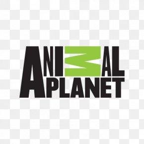 Cat - Animal Planet Cat Veterinarian Logo Film PNG