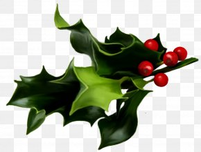 Mistletoe Art - Common Holly Mistletoe Christmas Clip Art PNG