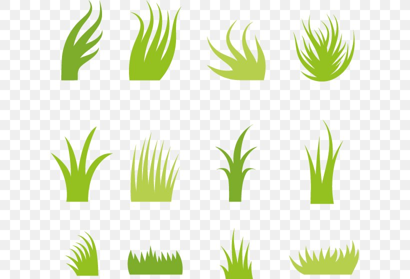 euclidean vector icon png 617x558px plant grass grass family green leaf download free euclidean vector icon png 617x558px