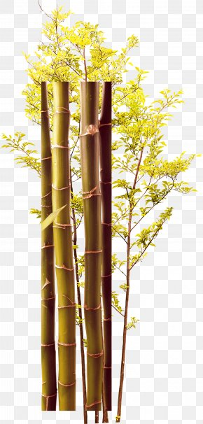 Creative Green Bamboo Trees - Twig Bamboo Green PNG