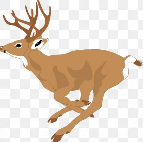 Free Wildlife Clipart - White-tailed Deer Clip Art PNG