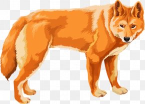 Northern Wolf - Euclidean Vector Stock Photography Illustration PNG