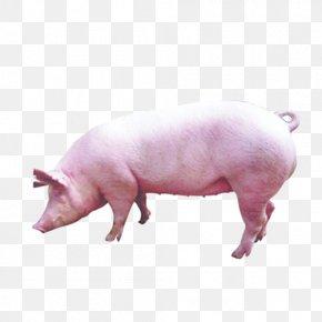 Pig - Pig Livestock PNG