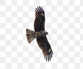 FLying Eagle - Bird Of Prey Hawk Eagle PNG