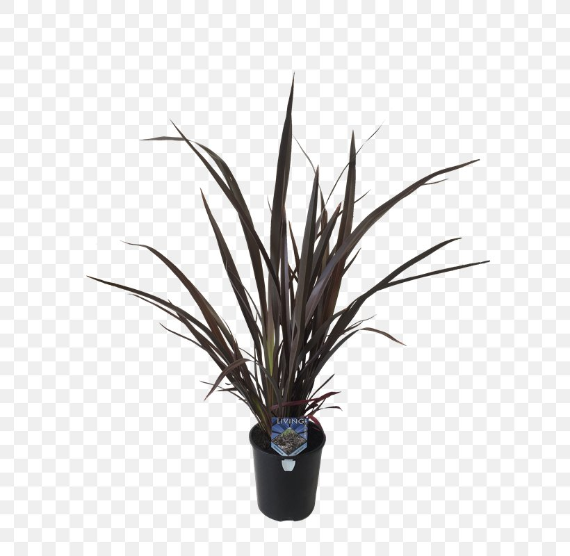 New Zealand Flax Flax In New Zealand Plants Png 800x800px New Zealand Flax Bunnings Warehouse Flax
