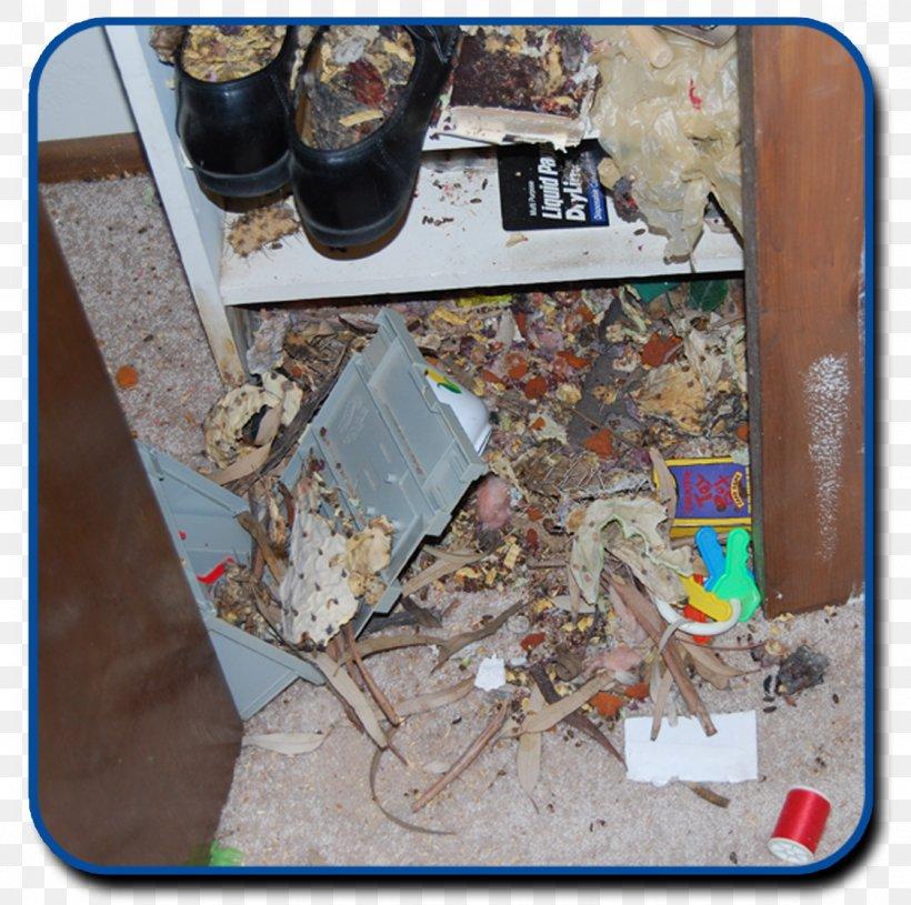 Rodent Black Rat Mouse Pest Control Rat Trap, PNG, 1122x1116px, Rodent, Bed Bug, Black Rat, Mouse, Pack Rat Download Free
