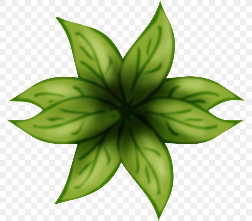 Leaf Green Plant Stem Flower, PNG, 774x718px, Leaf, Flora, Flower, Green, Plant Download Free