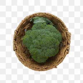 Fresh Broccoli - Superfood Broccoli Vegetable PNG