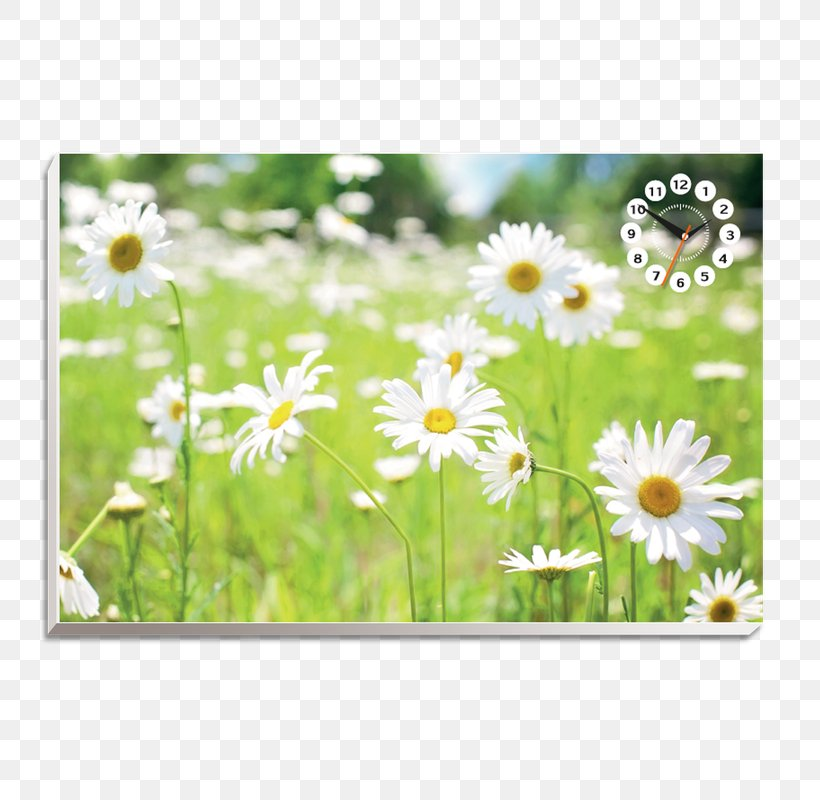 Square Foot Gardening Flower Child Wallpaper Png 800x800px Garden Child Daisy Daisy Family Flora Download Free