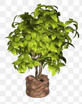 Flowerpot Houseplant Herb PNG