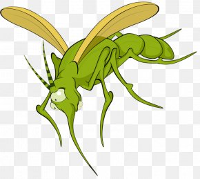 Cartoon Insects - Mosquito Insect Illustration PNG