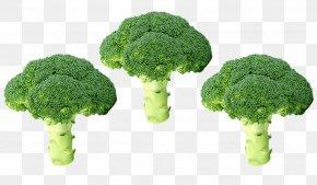 Vegetable - Vegetable Broccoli Clip Art Food PNG