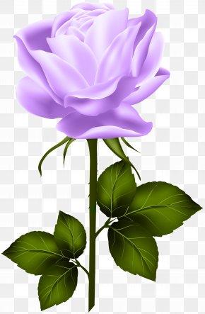 Purple Rose With Stem Clip Art - Centifolia Roses Clip Art PNG