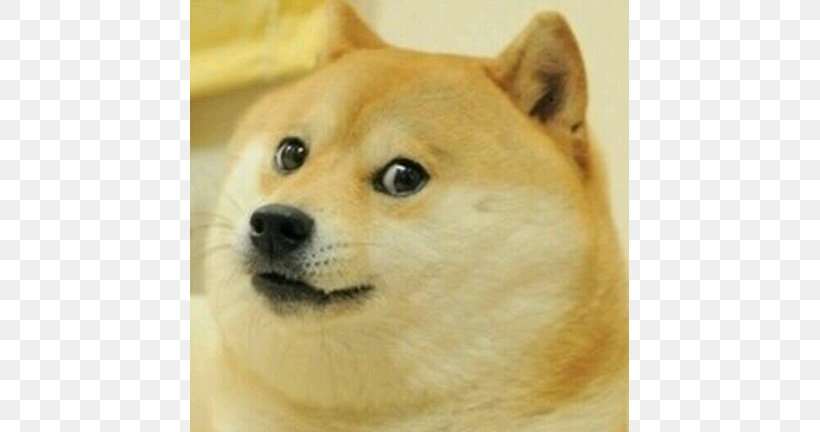 Military Doge Pants Roblox Dog Head Roblox Free Robux Codes Promo