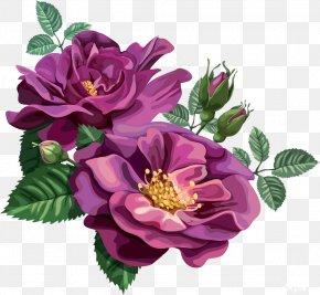 Rose - Blue Rose Flower Purple Clip Art PNG