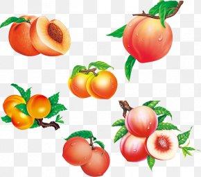 Peaches - Saturn Peach Fruit Auglis PNG