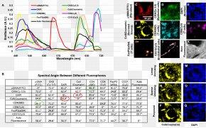 Microscope - Fluorescence Microscope Microscopy Spectrum PNG