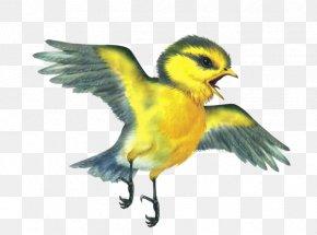 Cartoon Bird - Bird Animal Pre-school Kindergarten PNG