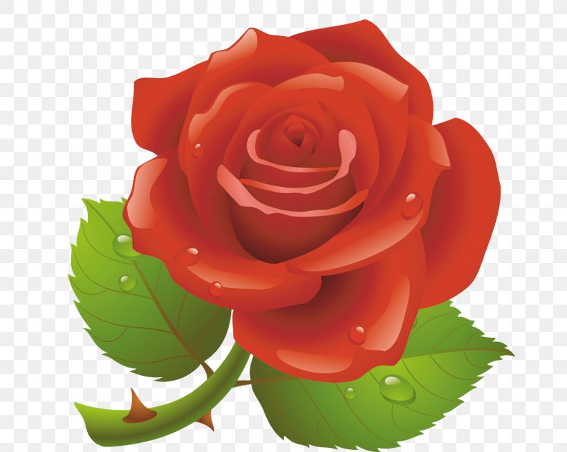 Valentine's Day Red Rose Clip Art, PNG, 670x653px, Valentine S Day, China Rose, Cut Flowers, Drawing, Floribunda Download Free