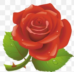 Valentine's Day - Valentine's Day Red Rose Clip Art PNG