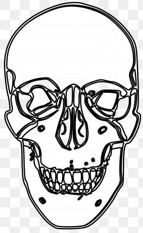 Skull Line Art - Black And White Calavera Visual Arts Line Art Clip Art PNG