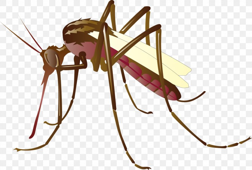 Mosquito Control Clip Art, PNG, 2305x1554px, Mosquito, Arthropod, Cartoon, Drawing, Fly Download Free