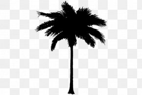 M Date Palm Leaf Plant Stem - Asian Palmyra Palm Black & White PNG