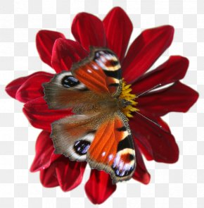 Butterfly Insect - Butterfly Insect Flower Quotation PNG