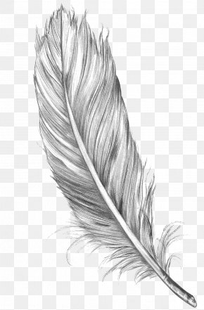 Feather - Drawing Feather Bird Art Sketch PNG