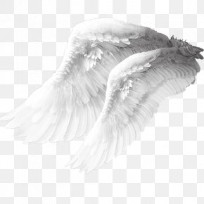 Angel Wings Material - Angel Wing Columbidae Bird PNG