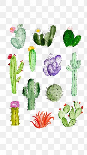 Cactus - Cactaceae Drawing Watercolor Painting Succulent Plant PNG