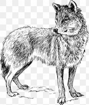 Wolf - Arctic Wolf Coyote Iberian Wolf Wolf Walking Clip Art PNG