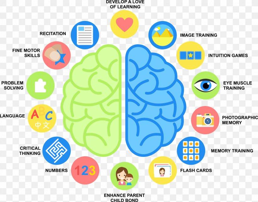 Human Brain Wiring Diagram Png, Brain Wiring Diagram