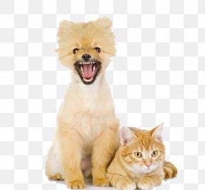 Puppy Kitten - Dogu2013cat Relationship Dogu2013cat Relationship Puppy Pet PNG