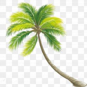 Palm Tree - Tree Color Shrub PNG