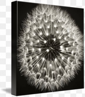 Dandelion - Black And White Fine-art Photography Fine-art Photography PNG