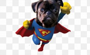 Pugs - Pug Dog Breed Management Superhero PNG