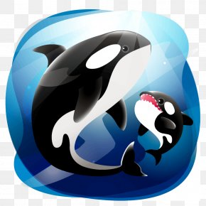 Dolphin - Bowhead Whale Dolphin Killer Whale Cetacea PNG