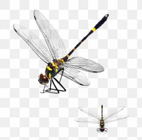 Dragonfly - Dragonfly Download App Store PNG