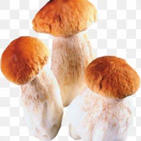 Mushroom - Edible Mushroom Fungus Boletus Edulis PNG