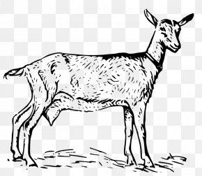 Public Domain Line Art - Nigerian Dwarf Goat Oberhasli Goat Poitou Goat Russian White Goat Sheep PNG