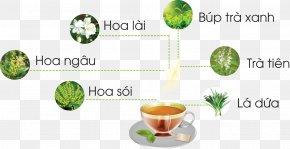 Tea - Ginseng Tea Pineapple Danang Matcha Bảo Lộc Ho Chi Minh City PNG