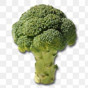 Broccoli - Broccoli Slaw Vegetable Broccoli Florets Vegetarian Cuisine PNG