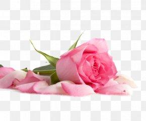 Pink Rose Decoration Pattern - Flower Pink Petal Wallpaper PNG