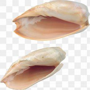 Seashell - Seashell Seafood PNG