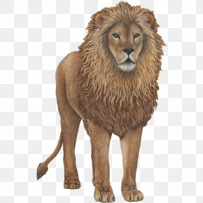 Lion - Lion Wall Decal Sticker PNG